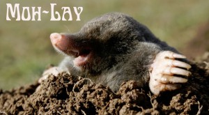 It's Mole Day, Olay