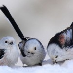 Snow-Birds to Naples, Florida