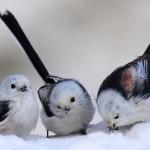 Snow-Birds to Naples, Florida